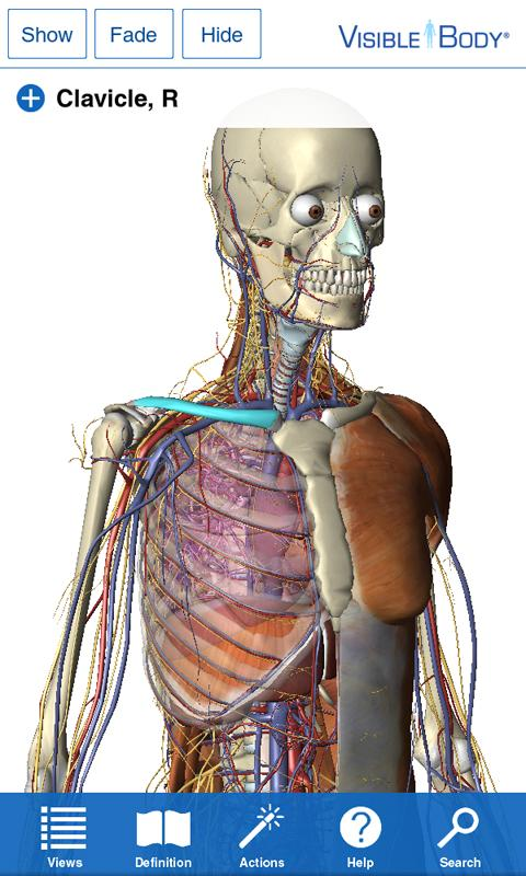 Visible Body 3d Anatomy Atlas Download And Install Android
