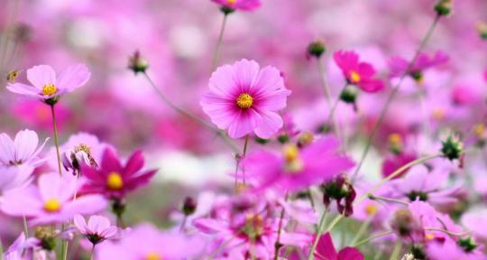 Spring Flowers Live Wallpaper Download And Install